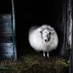 The Amazing Properties of Wool
