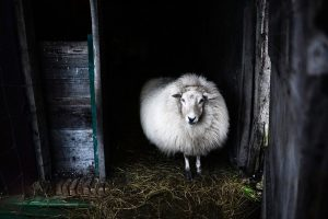 The Amazing Properties of Wool - A True Superfibre!
