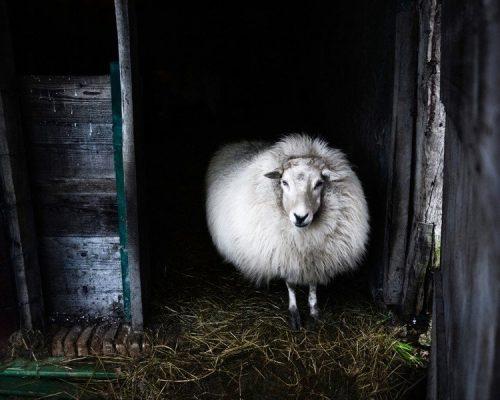 The Amazing Properties of Wool