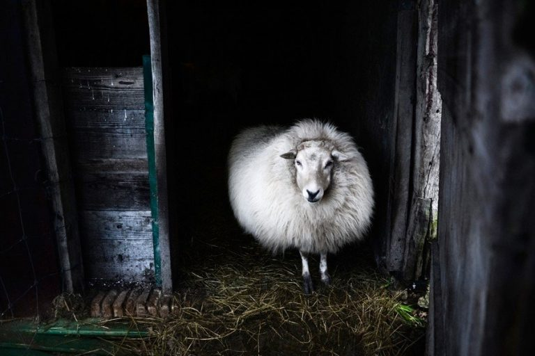 Read more about the article The Amazing Properties of Wool