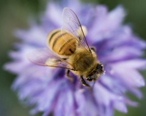 Manipulation Cloths for Beekeeping