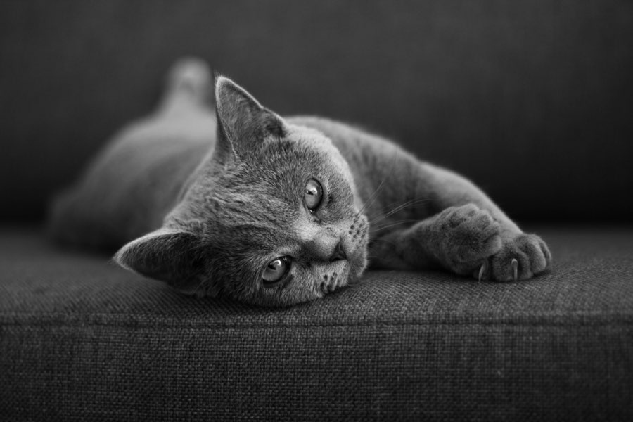 getting pet hair off of upholstery how to keep baize clean